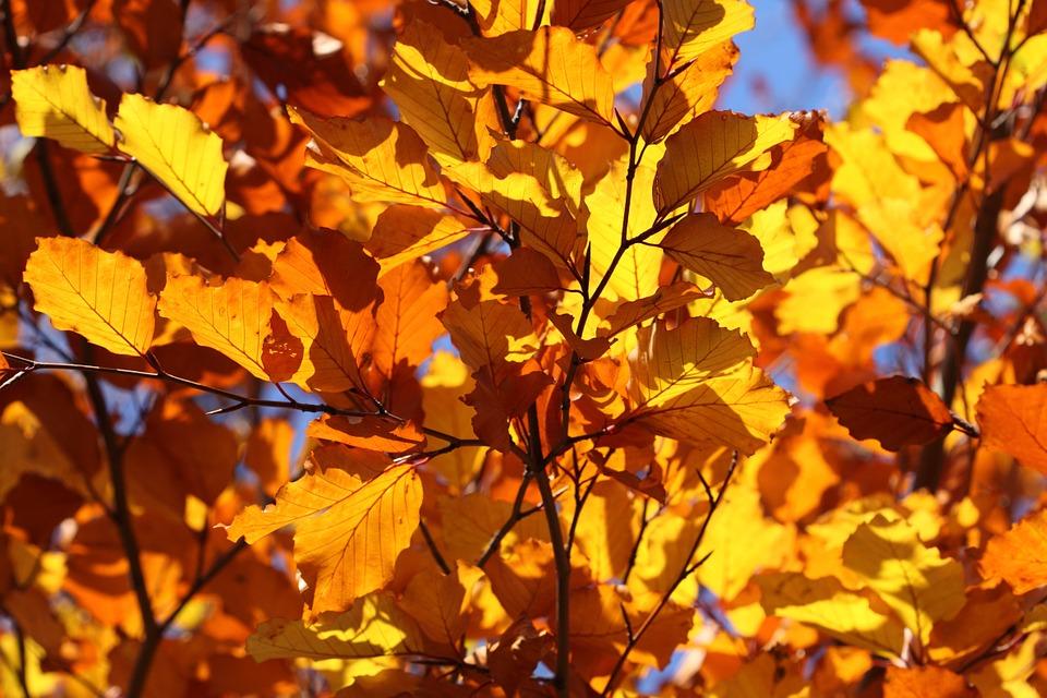 leaf-2012_960_720